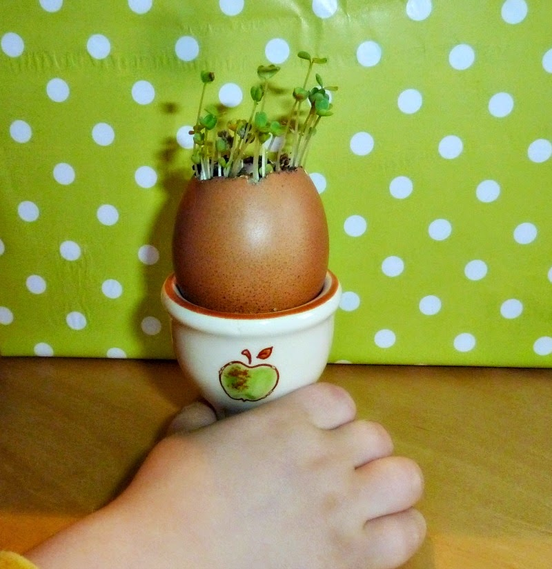 http://applegreencottage.blogspot.com/2015/03/how-to-start-seeds-in-eggshells.html