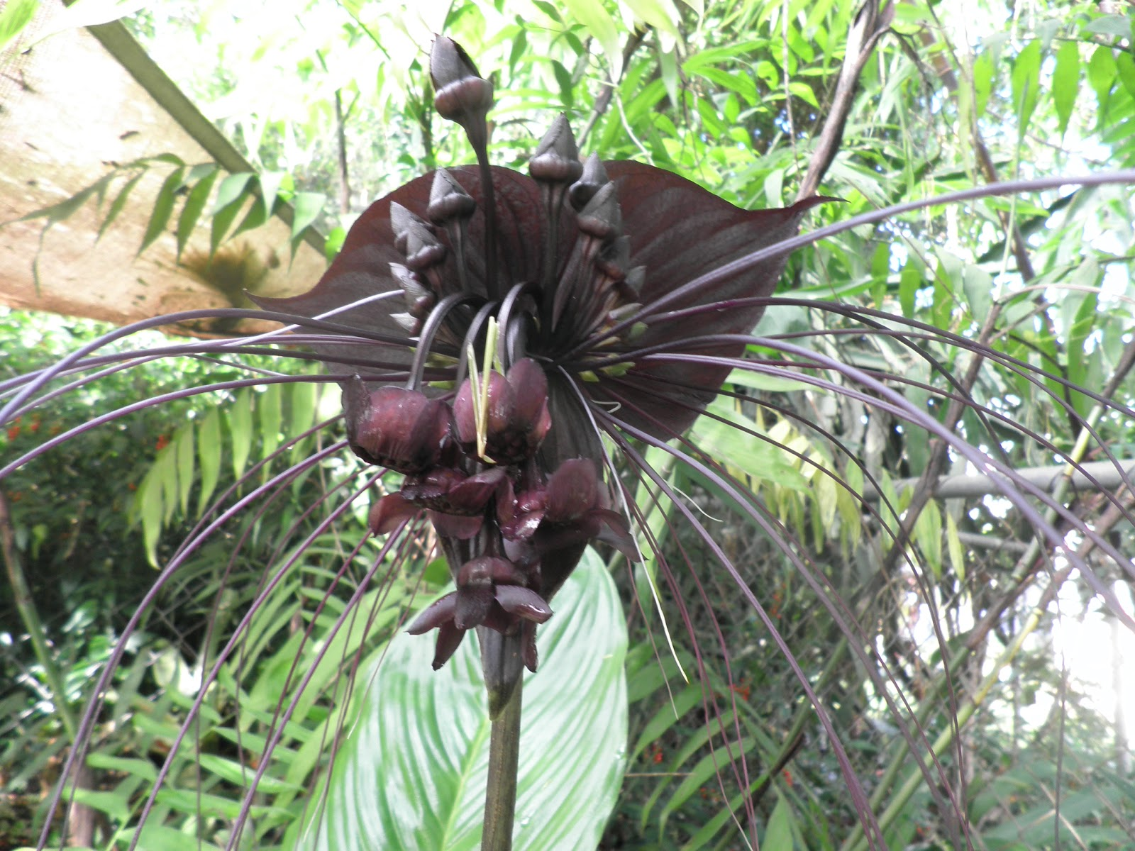 bat plants Frompo 1