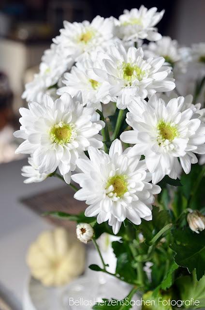 schöne Blumen weiß