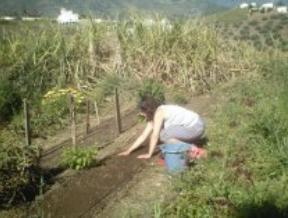 El karrasco ecol gico sobre nosotr s Rotaciones de cultivos ecologicos