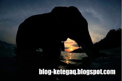 image gajah