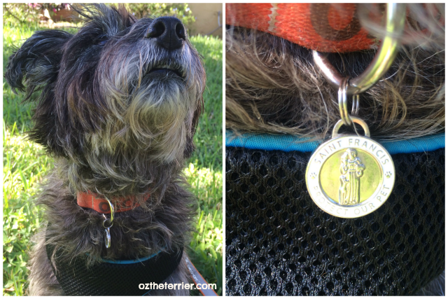Closer look at Oz the Terrier's new St. Francis of Assisi pet tag/charm from LuxePets