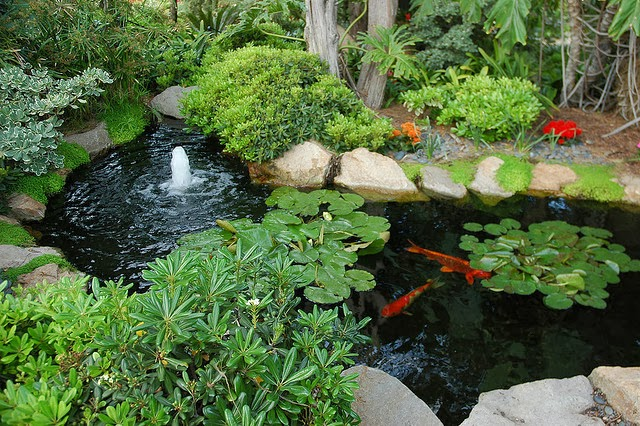 Ponds 101: Different Types of Garden Ponds