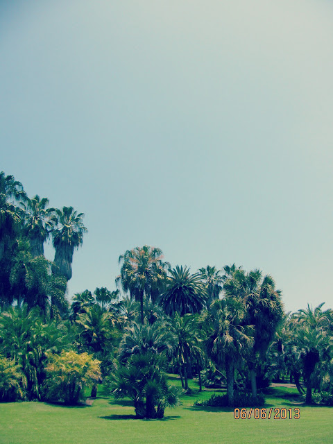 Huntington Gardens- Palm Trees