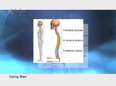 Anatoma de la columna vertebral I Curvaturas