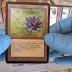 Colecionador abre pacote antigo de Magic e encontra carta rara de R$ 65 mil