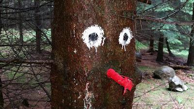 Ansigt på et af træerne ved Røverknolden i Rebild