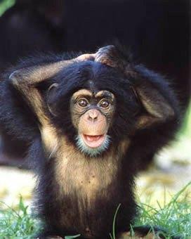 Monkey funny cute - photo#28