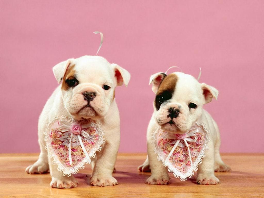 http://1.bp.blogspot.com/-ydOWsADNhVY/T3leulCrqKI/AAAAAAAAANo/_6pEDnnrfJU/s1600/cute-Dogs-wallpapers-images+%284%29.jpg