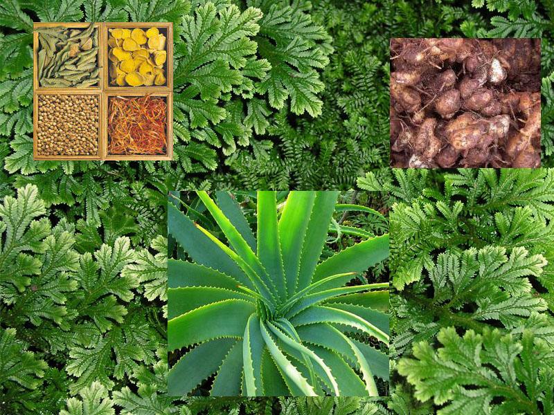 Mengapa Kini Banyak Orang yang Beralih ke Herbal