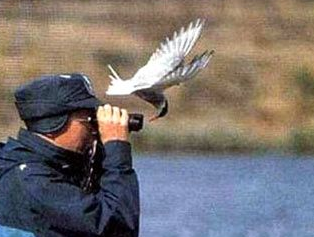 funniest picture of the bird watching with binoculars