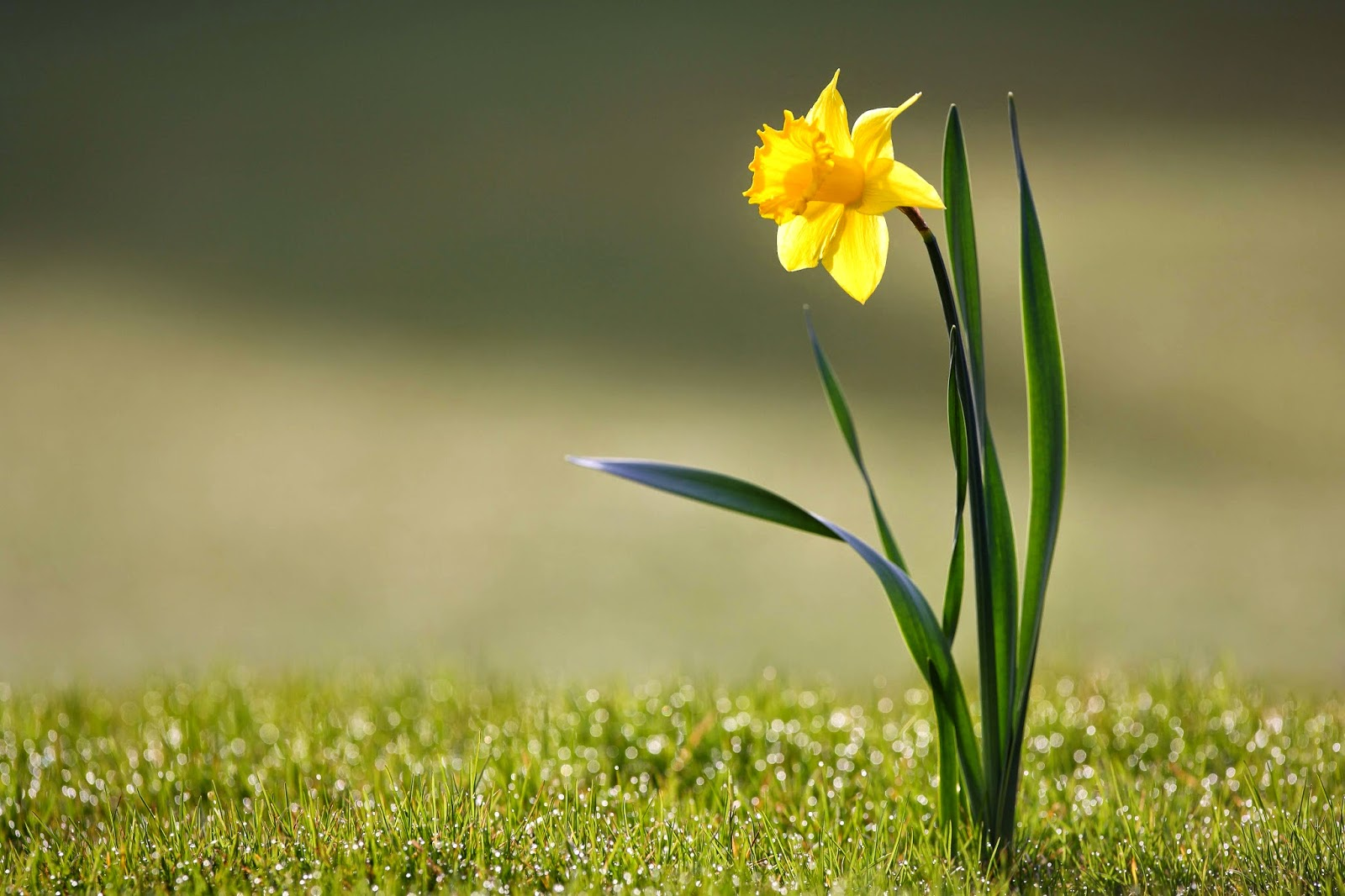 13 Eco-Friendly Tips For Spring
