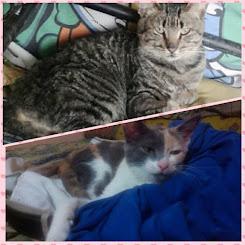 Les presento a mis gatos: