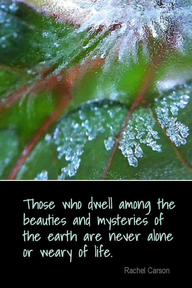visual quote - image quotation for NATURE - Those who dwell among the beauties and mysteries of the earth are never alone or weary of life. - Rachel Carson