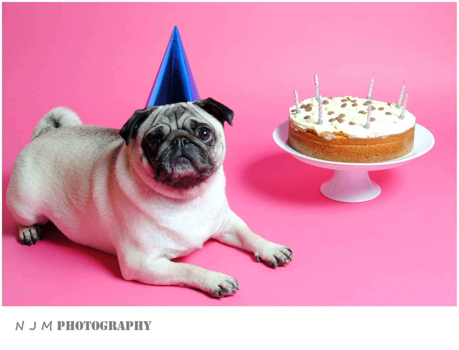 Открытки с днём рождения с мопсом