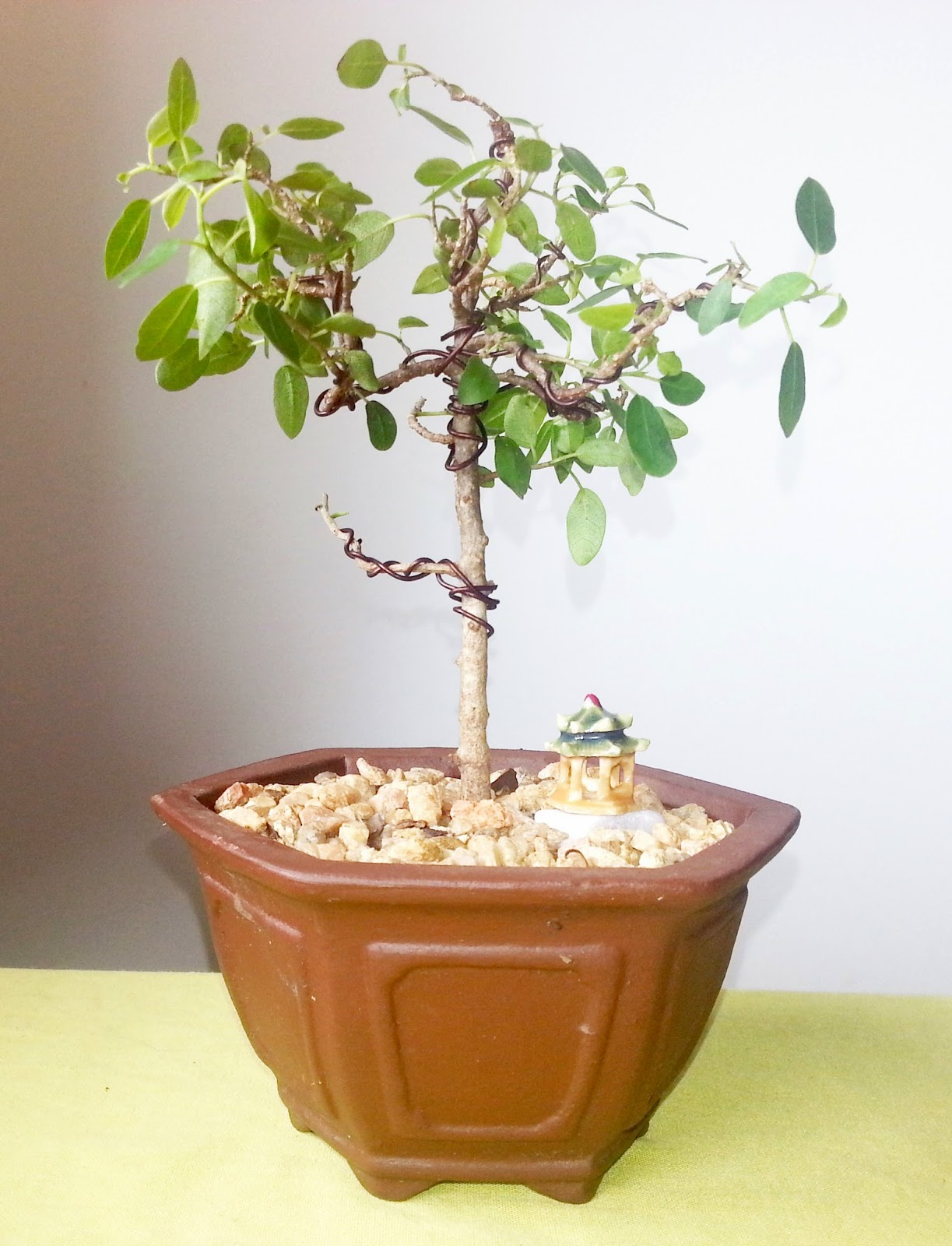 Learning The Art Of Bending Bonsai