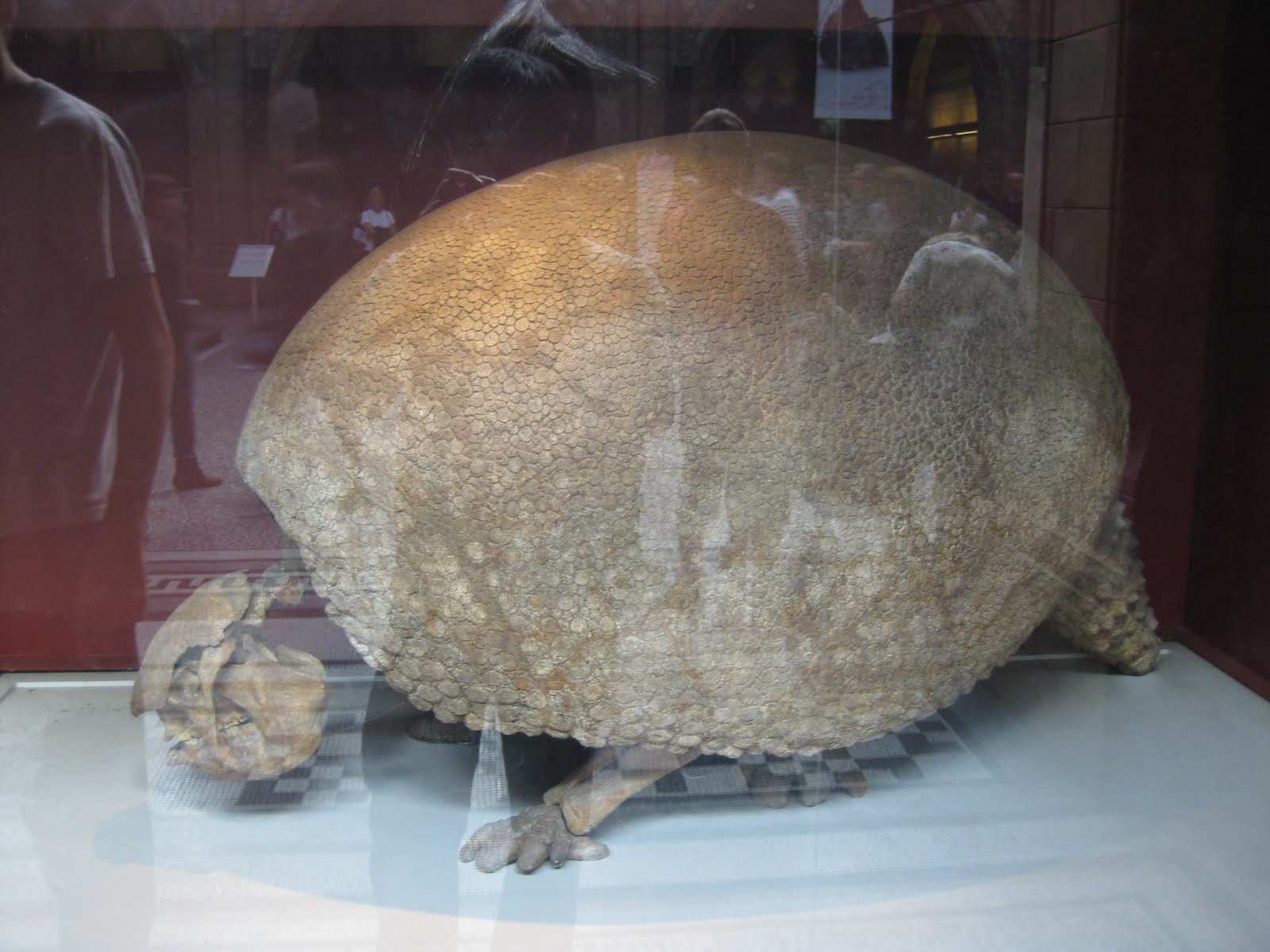 Ancient giant armadillo - photo#25