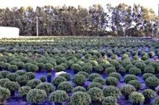Migliaia di piante a disposizione