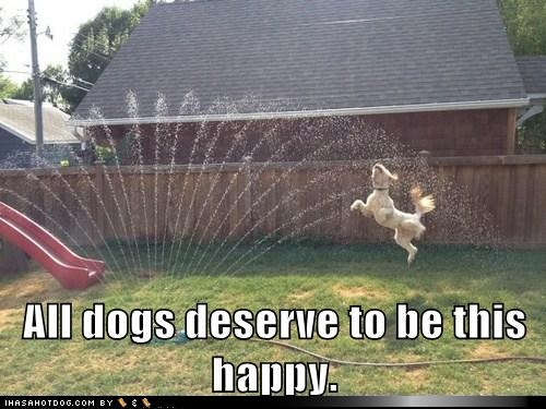 dog playing in a sprinkler, all dogs deserve to be this happy