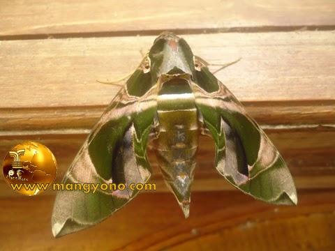 Pertanda kupu – kupu terbang ke rumah kita. Foto jepretan si Kaka