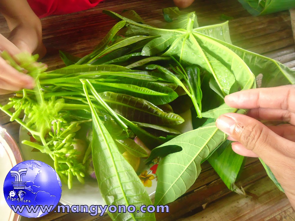 Lalapan Oplosan daun Jambu mete dan daun / bunga pepaya