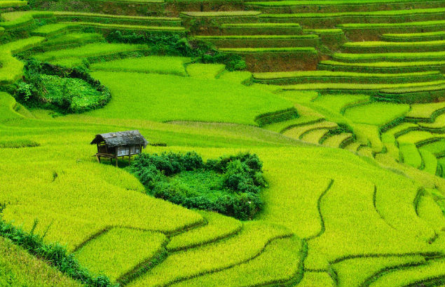 terrace paddy field in mai chau, mai chau rice field beautiful photo
