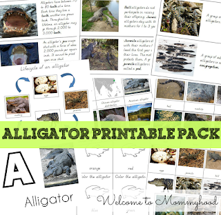 Preschool activities: FREE alligator printables by Welcome to Mommyhood #preschoolactivities, #toddleractivities, #montessori, #freeprintables