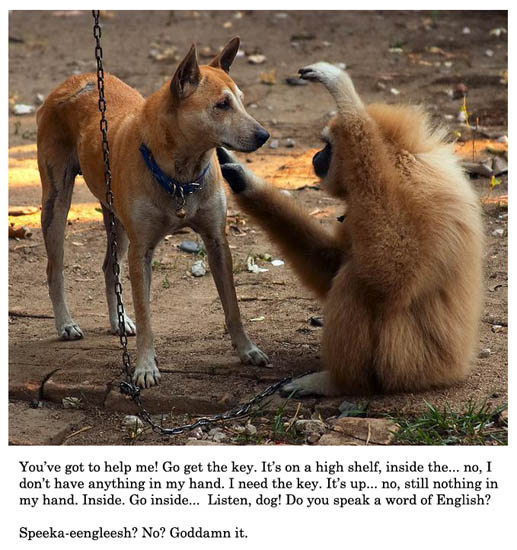 Dog and Monkey Speech