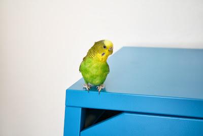 Roy et son nouveau meuble!