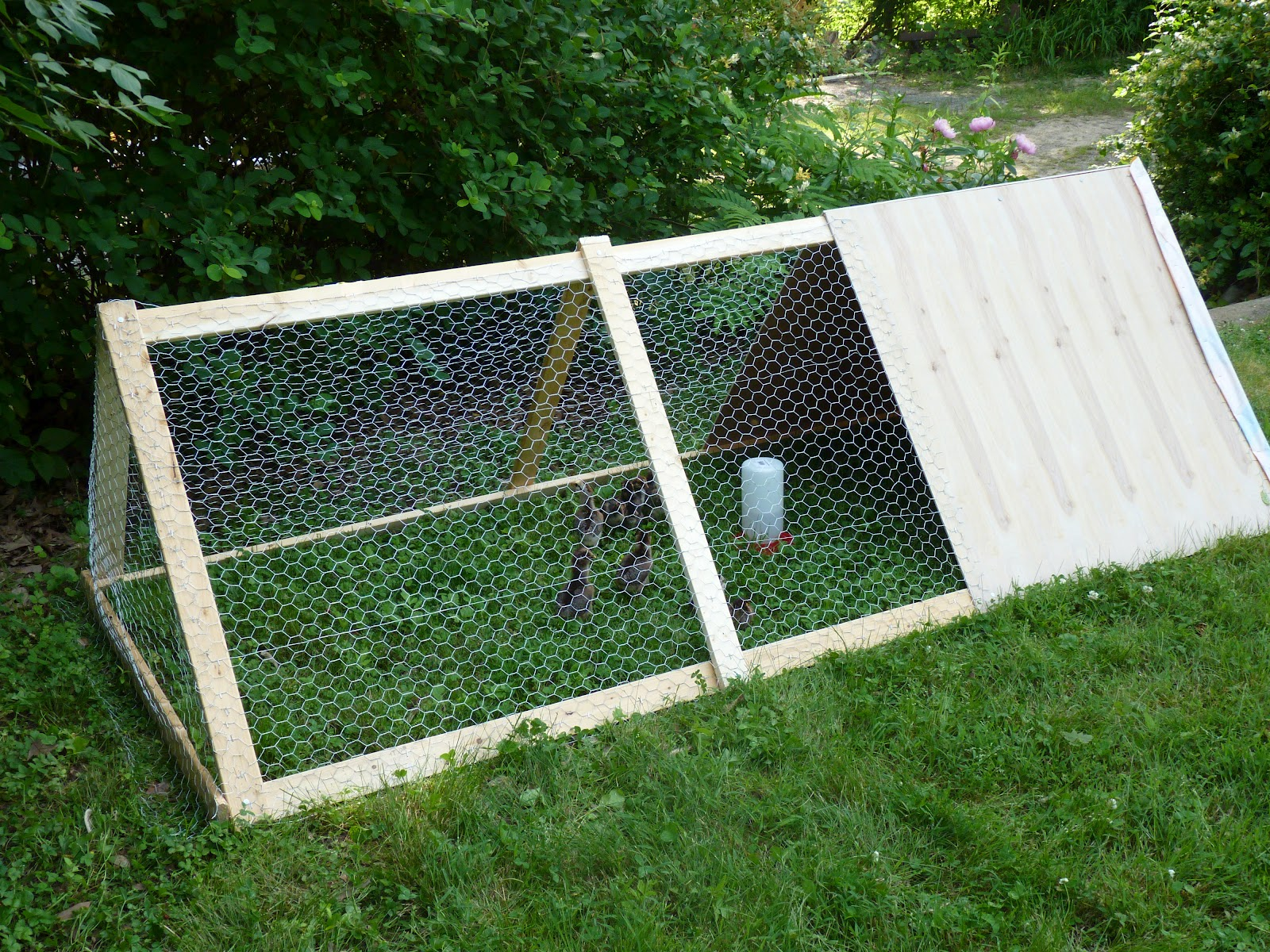 at the butterfly ball building an a frame chicken