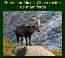 http://iberian-nature.blogspot.com.es/p/rutas-tematicas-observacion-de-mamiferos.html