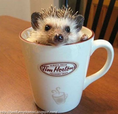 Funny hedgehog in a cup.