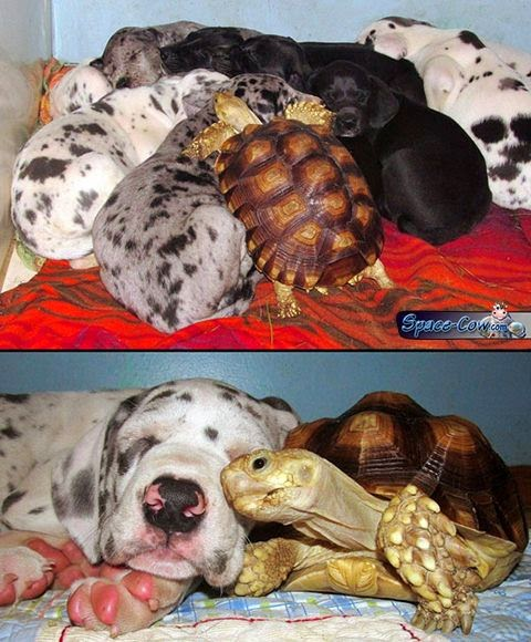 funny animals turtle picture