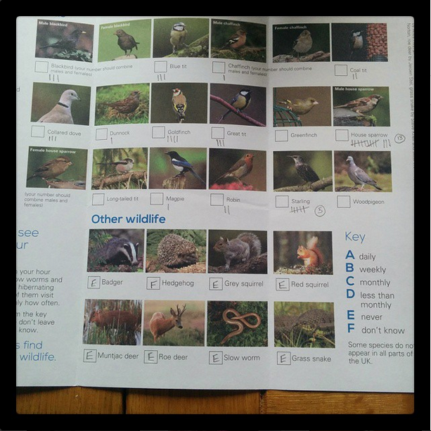 RSPB birdwatch sheet ~ 'growourown.blogspot.com'