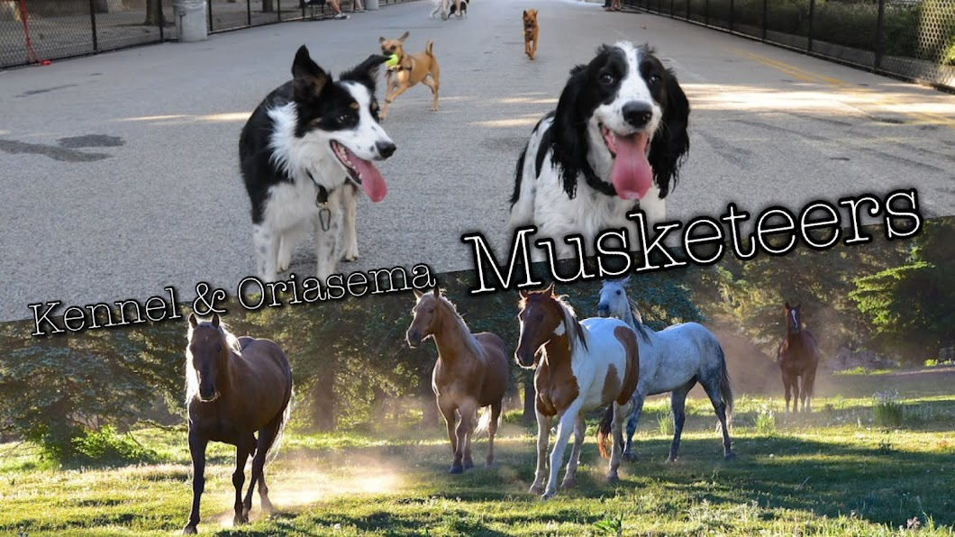 Kennel & Oriasema Musketeers