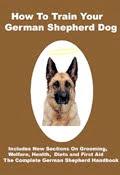 How Good Is Your German Shepherd Dog?
