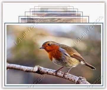 Zoom de imagens slideshow baseado em jquery