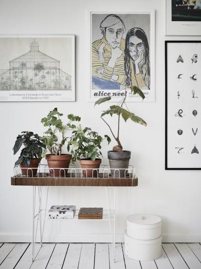 String kukkap yt string blombord reelinki for Acheter les plantes