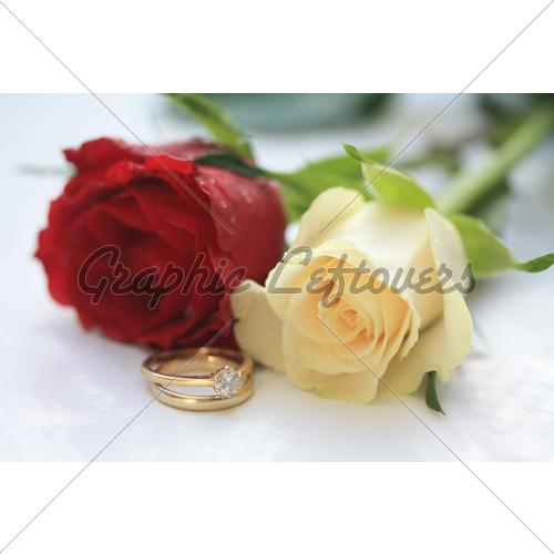 valentine's day roses ~ valentine day, Ideas