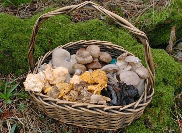 mushroom_basket