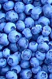 KC in the Kitchen: Blueberry Bonanza: Parfait & Gratin