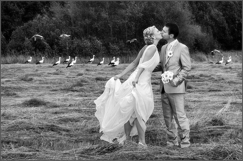 vestuvinės nuotraukos laukuose su gandrais