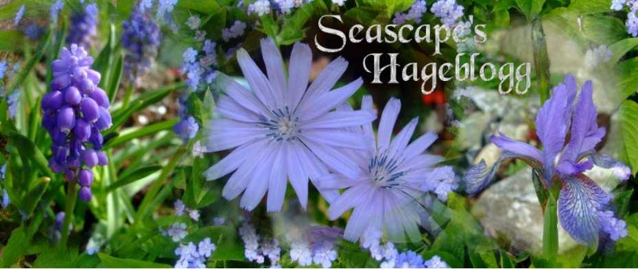 Seascape's Hageblog