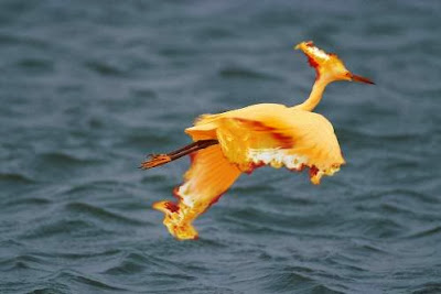 Pokemon real - Moltres
