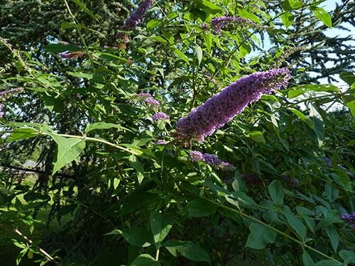 Les plantes indig nes et end miques flore de l le de la for Entretien jardin ile de la reunion