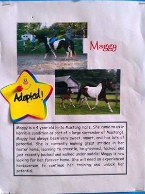 MSPCA Nevin's Farm Maggie Adopted Mustang