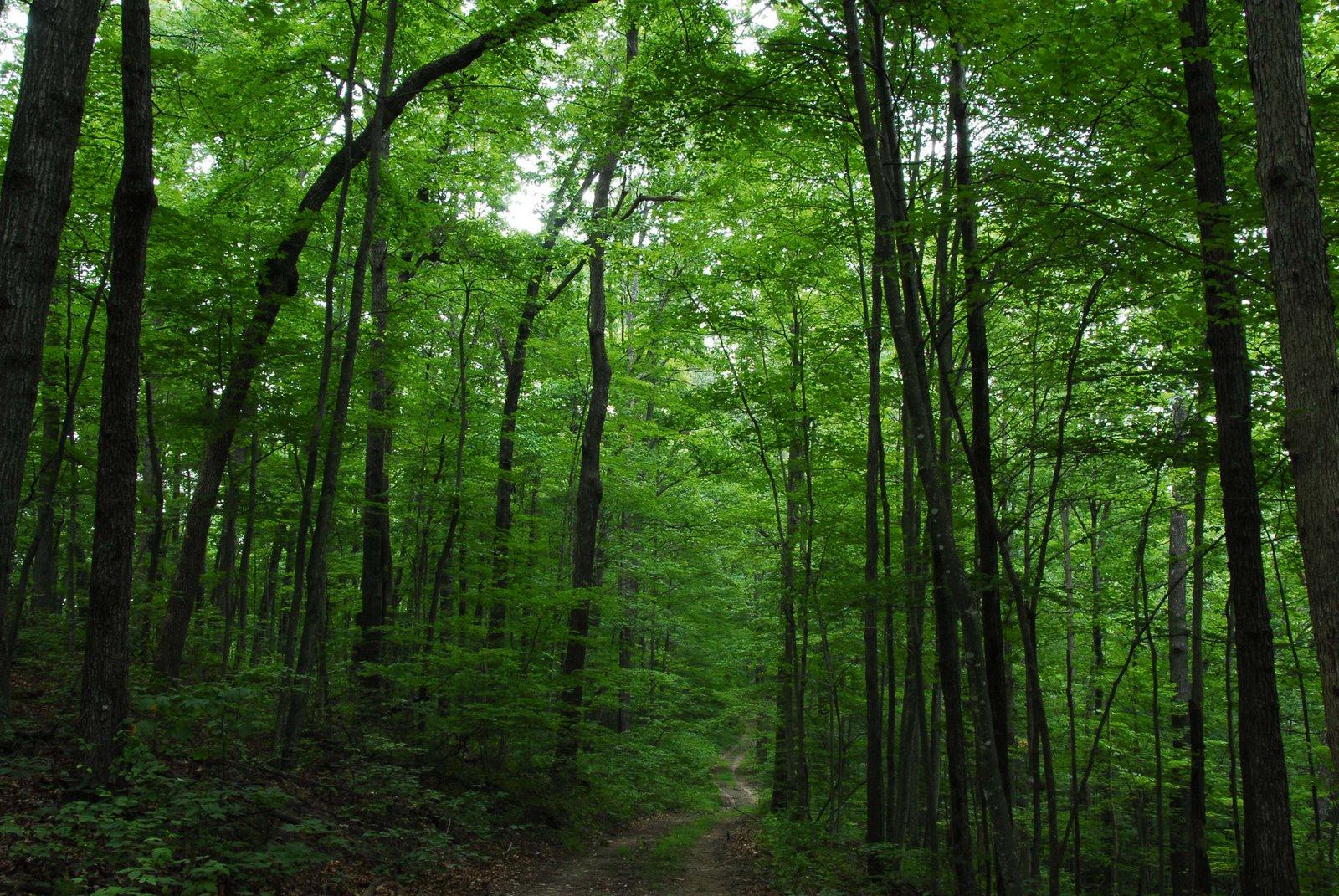 http://1.bp.blogspot.com/-yk303Qejpk8/TWAFHLrnJ0I/AAAAAAAADk4/iYmo35ved8c/s1600/Forest+trail.jpg