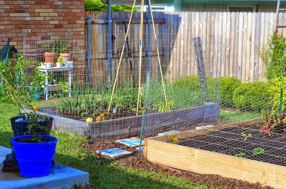 La Maison Boheme: Chicken Proof Garden Idea