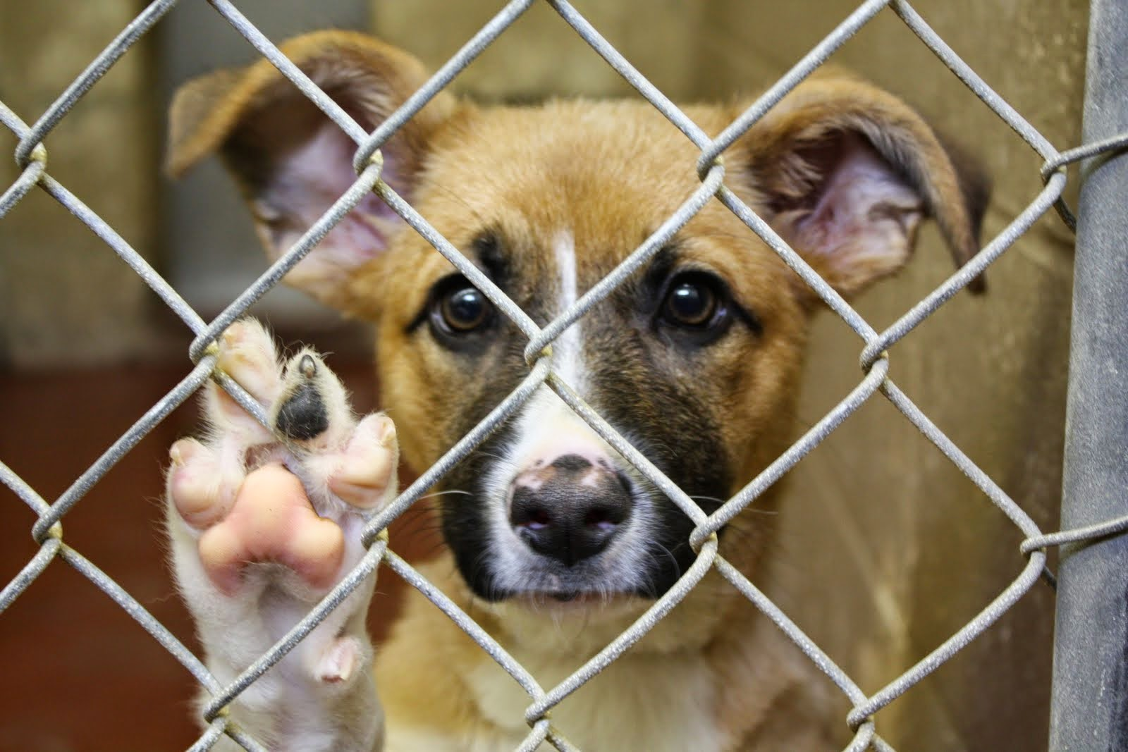 animal cruelty 5 Learn the 10 most common types of animal abuse while dogs are the most common abused animals, cats, kittens and puppies also suffer help animals in need.