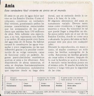 Blog Safari club, características de el Amia